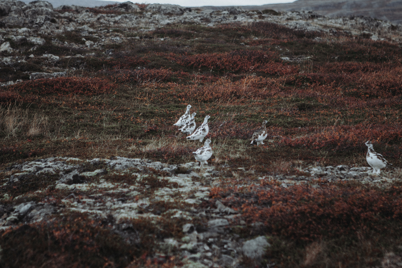 34_maria-und-linda_roadtrip_iceland_westfjords